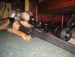 guard dog2