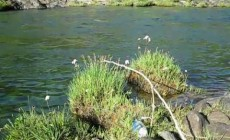 Survival Fishing: Best Ways To Catch Fish Without Traditional Equipment